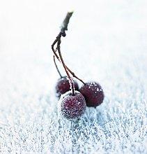 Bündel,Rasen,Beerenobst,Frost