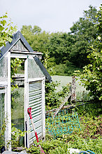 Greenhouse in back yard