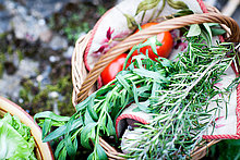 Basket of freshly picked tomatoes and herbs in garden