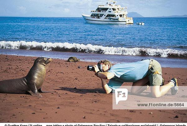 Löwe Panthera leo Fotografie nehmen Strand Meer Fotograf Galapagosinseln Ecuador