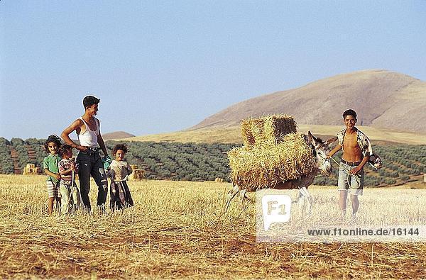 Children with donkey on field  Tabarka  Tunisia  North Africa