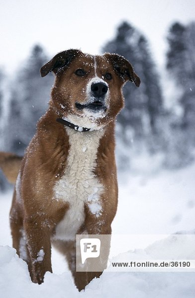 Close-up of dog standing in snow