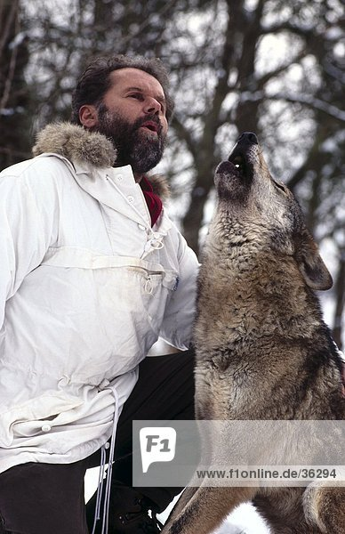 Man howling with Gray wolf (Canis lupus) in forest  Merzig  Germany