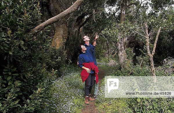 Zwei Wanderer im Wald  Fayal-Brezal  El Hierro  Kanaren  Spanien