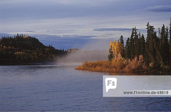 Bäume am Seeufer  Lake Laberge  Yukon  Kanada