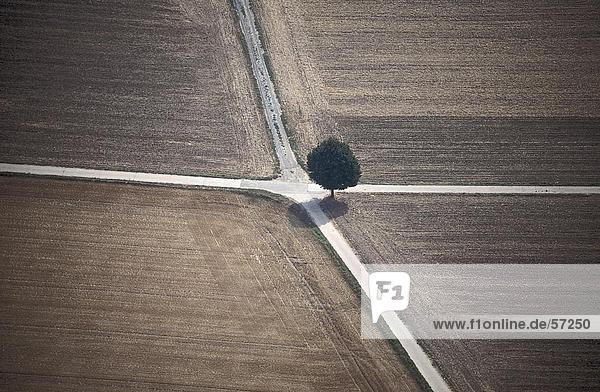 Luftbild von einem einsamen Baum an eine Kreuzung