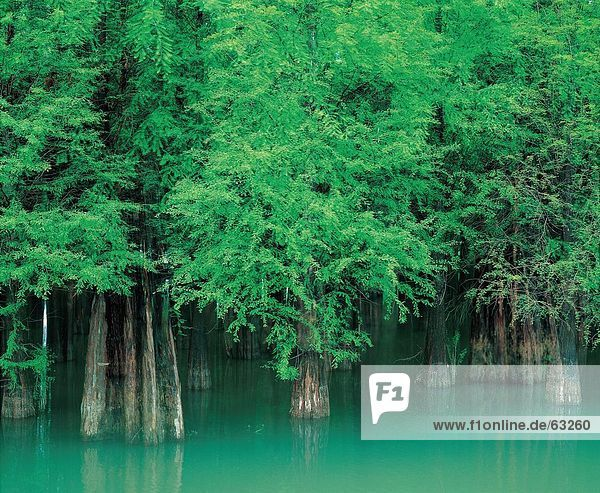 China  Diversiform-leaved poplars   Xinjiang