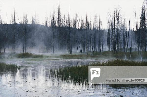 Reflection of clouds and trees in lake  Yellowstone Lake  Yellowstone National Park  Wyoming  USA