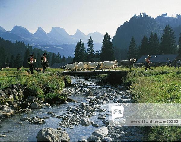 10800433,Alpaufzug,Alpen,Alpfahrt,Bach