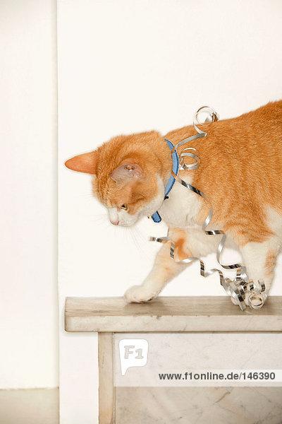 Silberband auf Katze