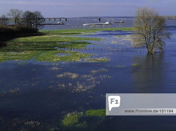 Baum und Boote im Fluss  Wesel  Nordrhein-Westfalen  Deutschland Baum und Boote im Fluss, Wesel, Nordrhein-Westfalen, Deutschland