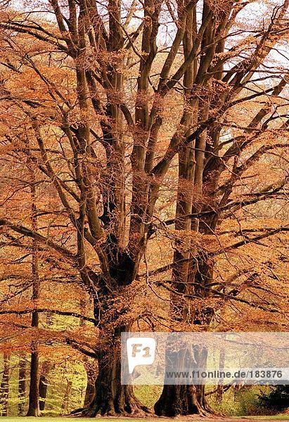 Bäume im Feld