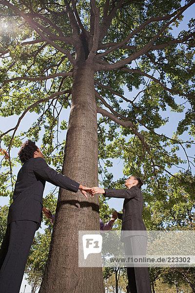 Geschäftsleute halten Händchen um einen Baum herum
