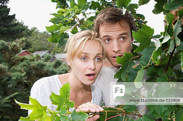 Ein Paar schaut von hinten auf einen Baum.