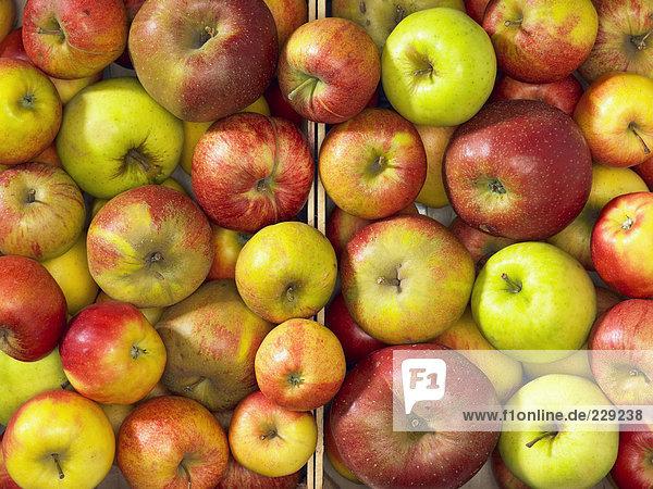 Verschiedene Äpfel in zwei Steigen (Draufsicht)