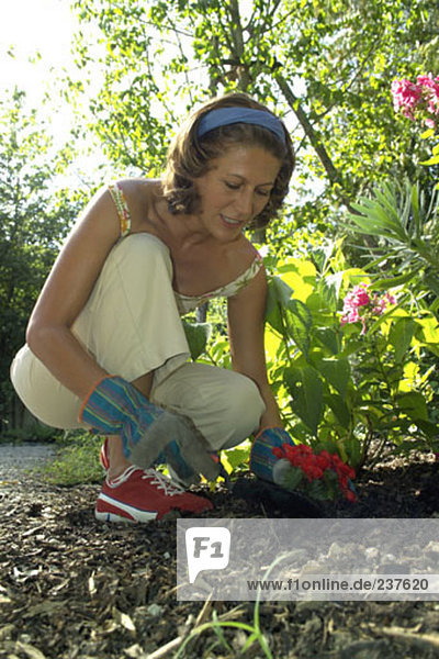 woman doing some gardening  kneeling in flowerbed and planting