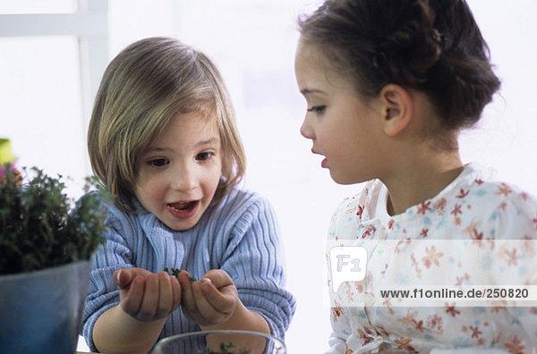 Zwei Kinder (4-7) mit Kräutern  Nahaufnahme
