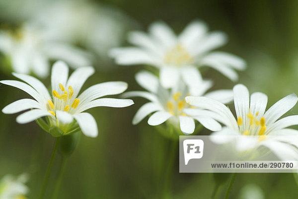 Nahaufnahme der Blumen