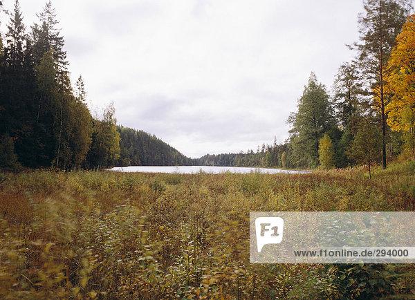 Ein See  umgeben von einem Wald Herbst.