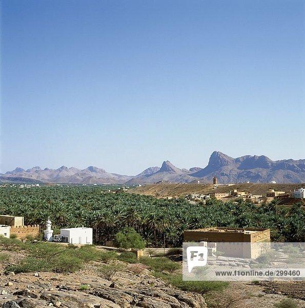 Palmen und Schlamm Gebäude auf Landschaft  Al Hamra  Oman