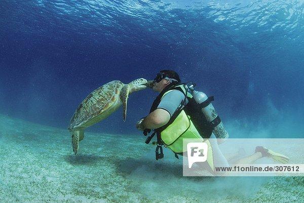 Philippinen  Taucher mit grüner Schildkröte  Unterwassersicht