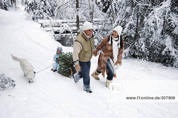 Österreich  Salzburger Land  Familie mit Hund und Weihnachtsbaum auf dem Schlitten