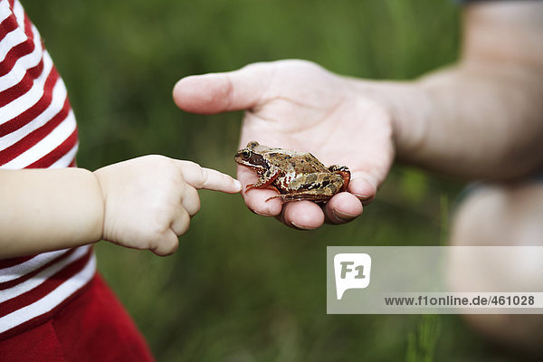 A frog in a hand.