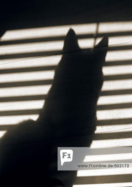 Schatten von Katze und Jalousien