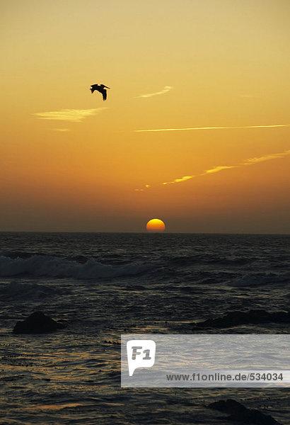 USA  Kalifornien  San Francisco  Sonnenuntergang auf See