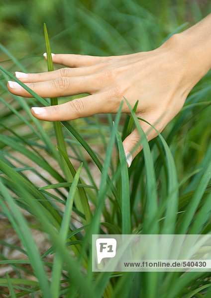 Frauenhandberühren lange Gras