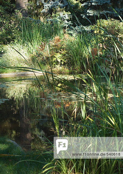 Teich und vegetation