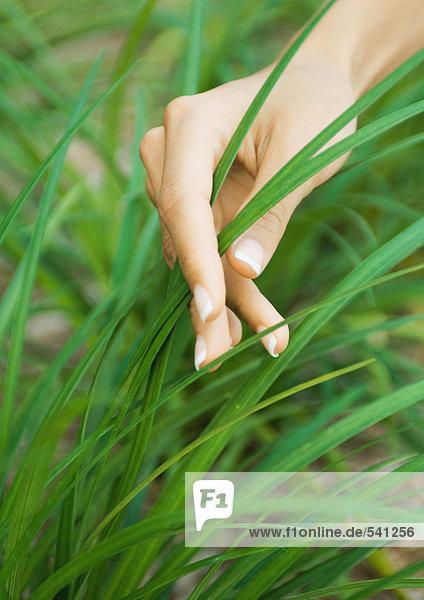 Frauenhandberühren Grashalme Frauenhandberühren Grashalme