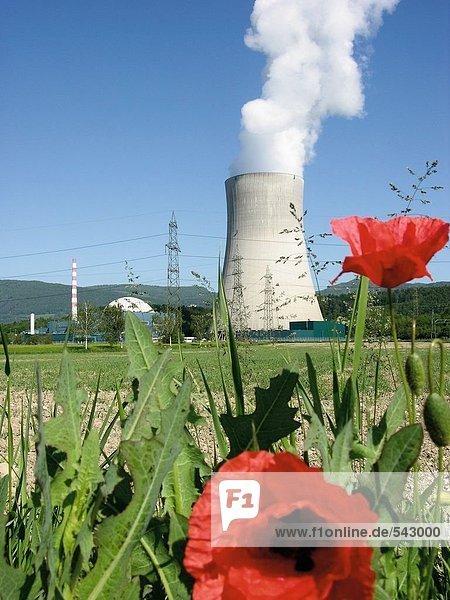 Pflanze frontal Kernreaktor Reaktor Mohn Schweiz