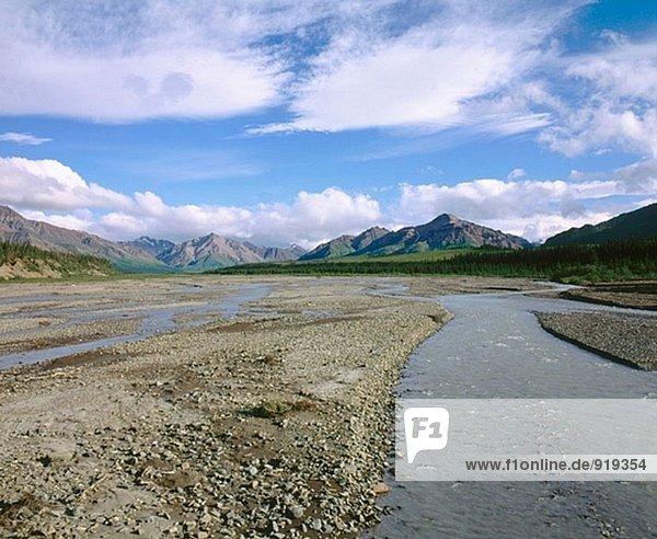 Teklanika River. Denali National Park. Alaska. USA