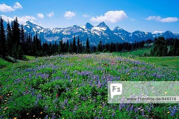 Sommer Wildblumen Bloom und Tatoosh Bereich. MT Rainier Nationalpark. Washington. USA