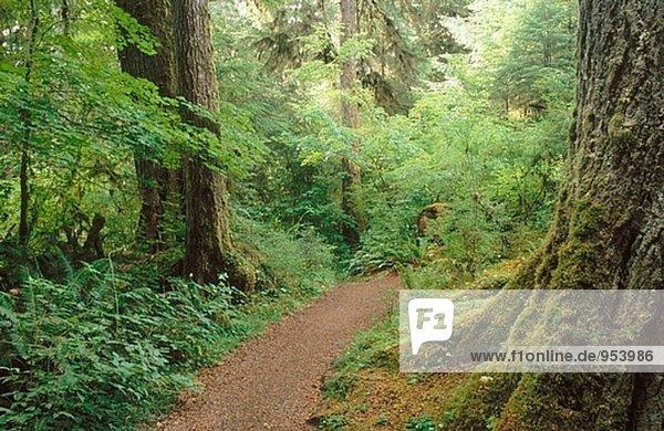 Spruce nature trail. Hoh Rain Forest. Olympic National Park. Washington. USA