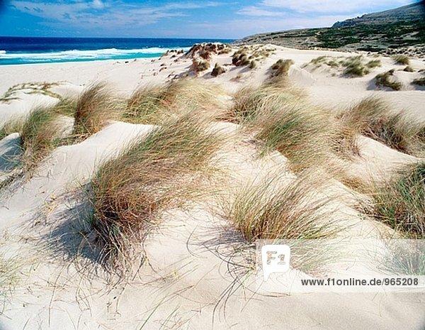 Dünen an Cala Mesquida. Mallorca  Balearen. Spanien