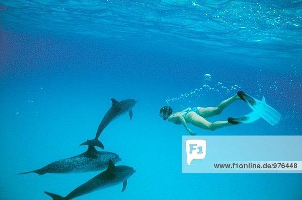 Stenella Frontalis. Gefleckte Delphine und Forscher unter Wasser. Little Bahama.