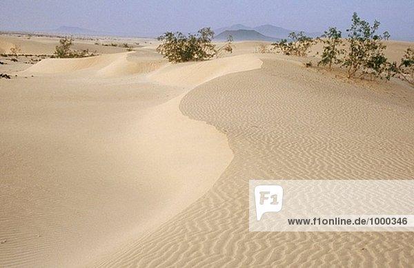 Dunas de Corralejo Naturschutzgebiet. Lobos Insel. Fuerteventura. Kanarischen Inseln. Spanien