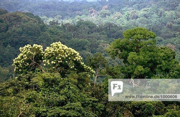 Wald  Korup  Kamerun