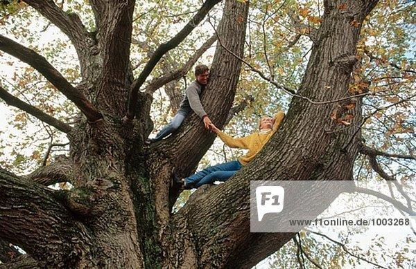 Paar in old Red Oak tree