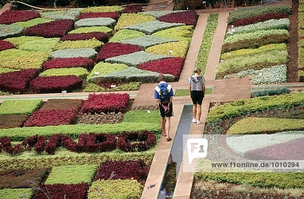 Garten Insel Botanik Funchal Madeira Portugal