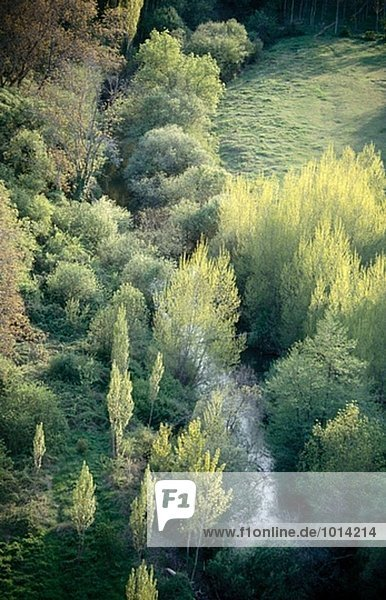 Riverside Wald. Hoces del Duraton  Segovia  Spanien.
