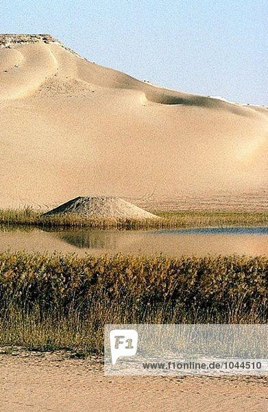 Quellcode in der Wüste zwischen Sanddünen  Lybische Wüste und Oase. Ägypten