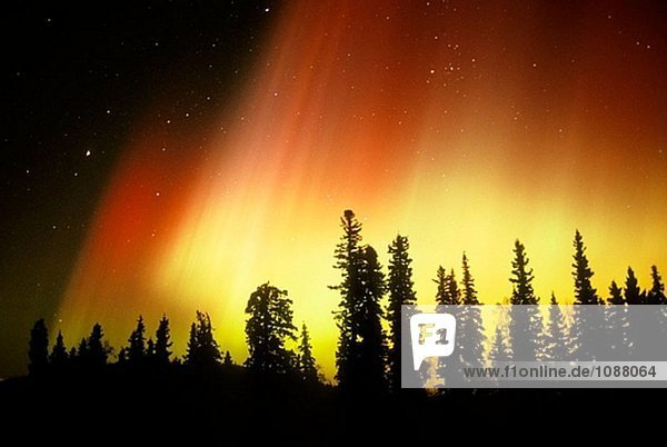 Aurora Borealis (Northern Lights). Alaska. USA