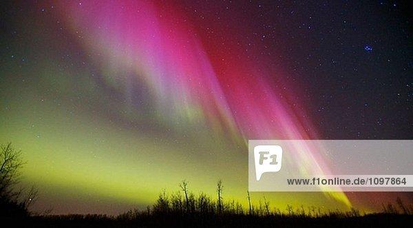 Nordlichter über Elk Island-Nationalpark in Alberta  Kanada