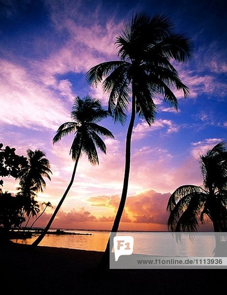 Karibik. Guadeloupe. Ste-Anne Beach  Sonnenaufgang