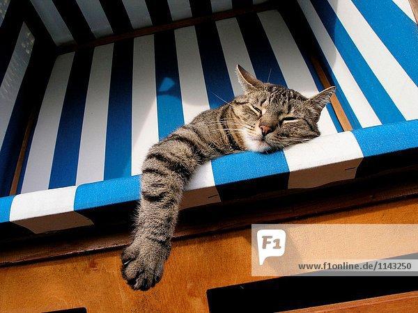 Faule Katze liegend im Liegestuhl
