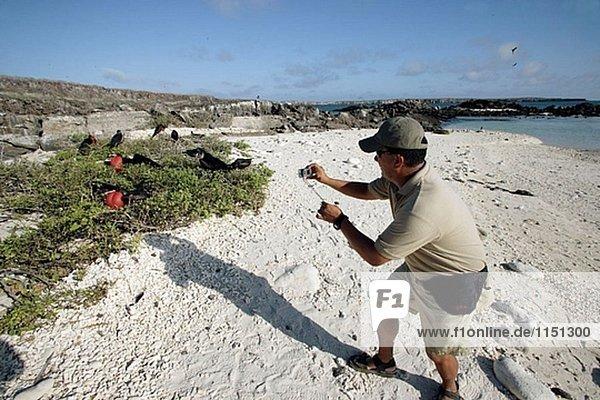 Bindenfregattvogel (Fregata minor). Genovesa (Turm) Insel  Galapagos-Inseln  Ecuador