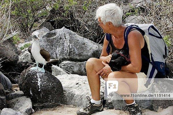 Blaufußtölpel (Sula Nebouxii). Española (Haube) Insel  Galapagos-Inseln  Ecuador